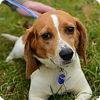 Adopt A Pet :: Mickey Hughes - Waldorf, MD