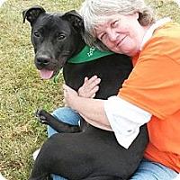 Adopt A Pet :: Brady - Reisterstown, MD