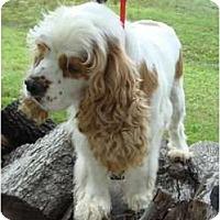 Adopt A Pet :: Willow - Sugarland, TX