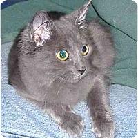 Adopt A Pet :: Walton - Colmar, PA