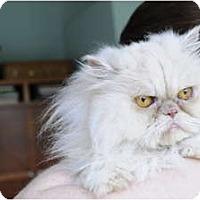 Adopt A Pet :: Prince - Columbus, OH