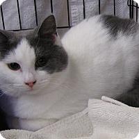 Adopt A Pet :: Luke - Berkeley Hts, NJ