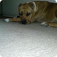 Adopt A Pet :: Lindsay - Surprise, AZ