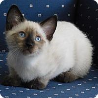 Adopt A Pet :: Tahoe - Davis, CA