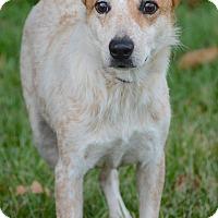 Adopt A Pet :: Crystal - Charlemont, MA