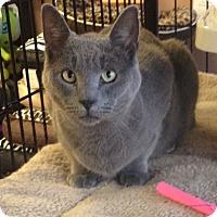 Adopt A Pet :: Sameow - Horsham, PA