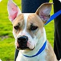 Adopt A Pet :: Holly - Livermore, CA