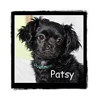 Adopt A Pet :: Patsy - Warren, PA