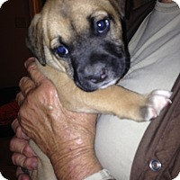 Adopt A Pet :: Rex - Daleville, AL