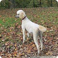 Adopt A Pet :: MACY ~ Very smart! - WOODSFIELD, OH