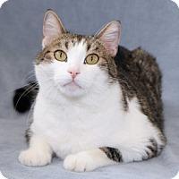 Adopt A Pet :: Hootie - Encinitas, CA