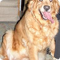 Adopt A Pet :: Ginger - Murdock, FL