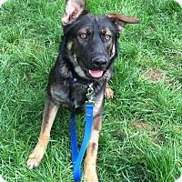 Adopt A Pet :: Jack - Morrisville, NC