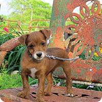 Adopt A Pet :: TUFFY - Bedminster, NJ