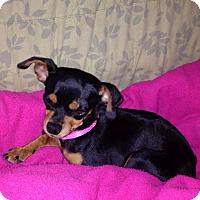 Adopt A Pet :: Maddie - Huntsville, AL
