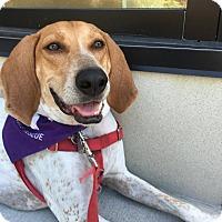 Adopt A Pet :: Perry - Washington, DC