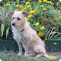 Adopt A Pet :: SUNDI - Hartford, CT