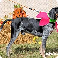 Bluetick Coonhound Mix Dog for adoption in Atlanta, Georgia - Seamus