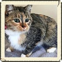 Adopt A Pet :: Sprinkles - Gahanna, OH