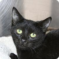 Adopt A Pet :: Shiloh - Sarasota, FL