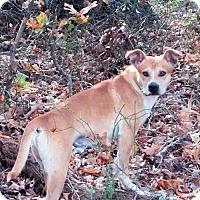 Adopt A Pet :: Rocky - Rutherfordton, NC