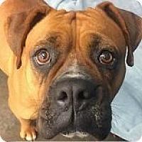 Adopt A Pet :: Allie - Springdale, AR
