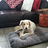 Adopt A Pet :: June - Columbus, OH