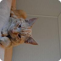 Adopt A Pet :: Green - St. Charles, MO