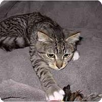 Adopt A Pet :: Felix - Modesto, CA