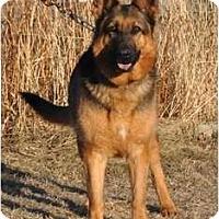 Adopt A Pet :: Molly - Hamilton, MT