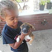 Adopt A Pet :: CeCe - Cincinnati, OH