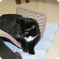 Adopt A Pet :: Turner - Trevose, PA