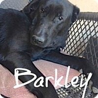 Adopt A Pet :: Barkley - Scottsdale, AZ