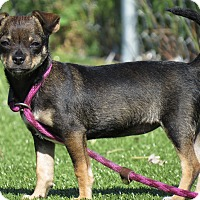 Adopt A Pet :: Brianne - Meridian, ID