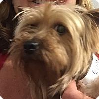 Adopt A Pet :: Greta - Richmond, VA