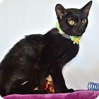 Adopt A Pet :: Leon - Colorado Springs, CO