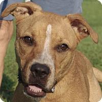 Adopt A Dog Daytona Beach Fl