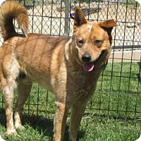 Adopt A Pet :: CASH - Norco, CA