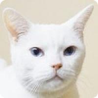 Adopt A Pet :: Fernanda - Medford, MA