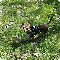 Dog Adoption Events Nashville Tn