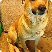 Adopt A Pet :: Sparky - Redding, CA