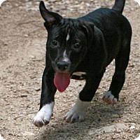 Adopt A Pet :: Marco - Towson, MD