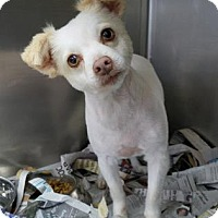 Adopt A Pet :: Flor - Miami, FL