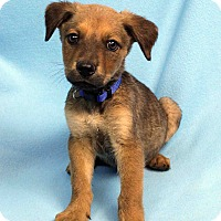 Adopt A Pet :: DUNCAN - Westminster, CO