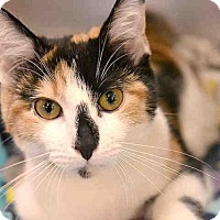 Adopt A Pet :: JACKIE - Pittsburgh, PA