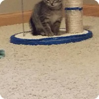 Adopt A Pet :: Dratini - Princeton, MN