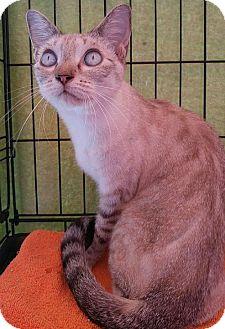 Siamese Cat for adoption in Powder Springs, Georgia - THALIA