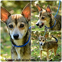 Adopt A Pet :: Spencer - Siler City, NC