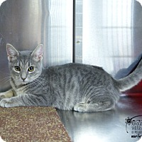 Adopt A Pet :: Todd - Marlinton, WV