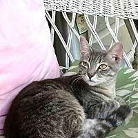 Adopt A Pet :: Cupcake - Texarkana, AR